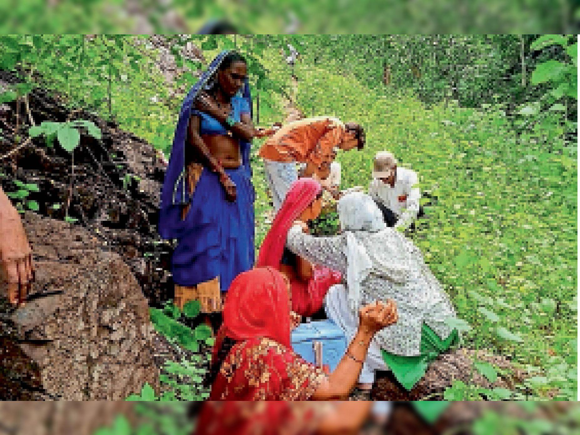 खेतों में और पहाड़ी क्षेत्रों में टीकाकरण करता स्वास्थ्य विभाग का अमला। - Dainik Bhaskar