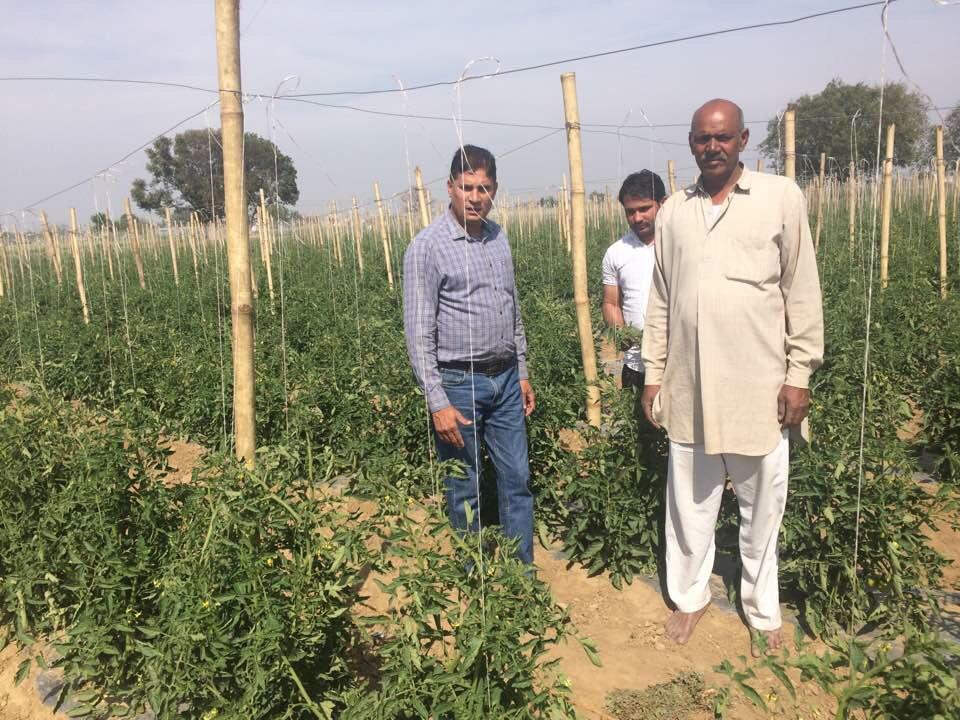 वर्टिकल पद्धति से खेती का जायजा लेते किसान। - Dainik Bhaskar