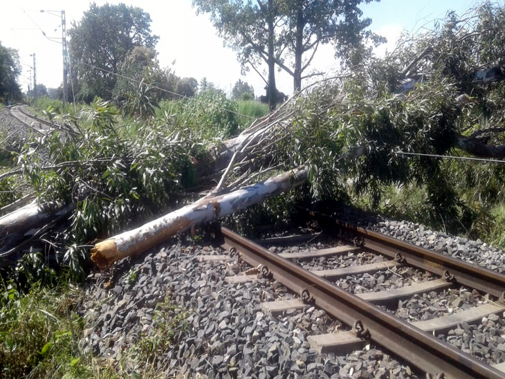 गोरखपुर- नौतनवा रेलवे ट्रैक पर गिरे दो पेड़; अलग- अलग स्टेशनों पर खड़ी रही हमसफर, इंटरसिटी और पैसेंजर ट्रेनें|गोरखपुर,Gorakhpur - Dainik Bhaskar