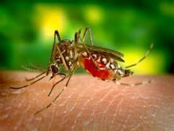 लखनऊ में भी डेंगू के मरीजों की संख्या में इजाफा देखा जा रहा है।मंगलवार को 15 मरीजों की डेंगू कार्ड टेस्ट रिपोर्ट पॉजिटिव आने के बाद एलाइजा टेस्ट के लिए भी सभी के सैंपल भेजे गए है - प्रतीकात्मक चित्र - Dainik Bhaskar