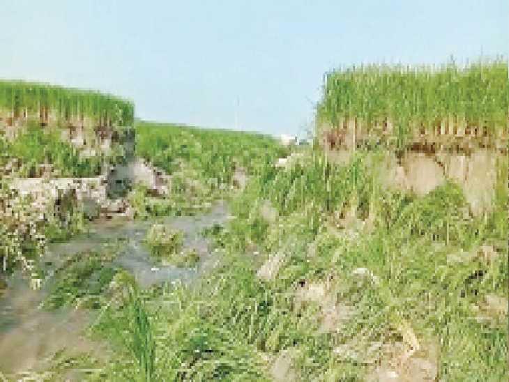म्याणी बस्ती गांव में 3 एकड़ में फसल के साथ-साथ 15 फुट तक मिटटी खिसकी - Dainik Bhaskar