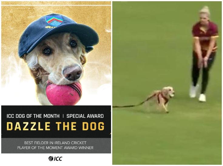 मैदान पर घुसे कुत्ते को ICC ने दिया 'डॉग ऑफ द मंथ' का अवॉर्ड, मैच के दौरान बॉल मुंह में दबाकर लगाई थी दौड़|क्रिकेट,Cricket - Dainik Bhaskar
