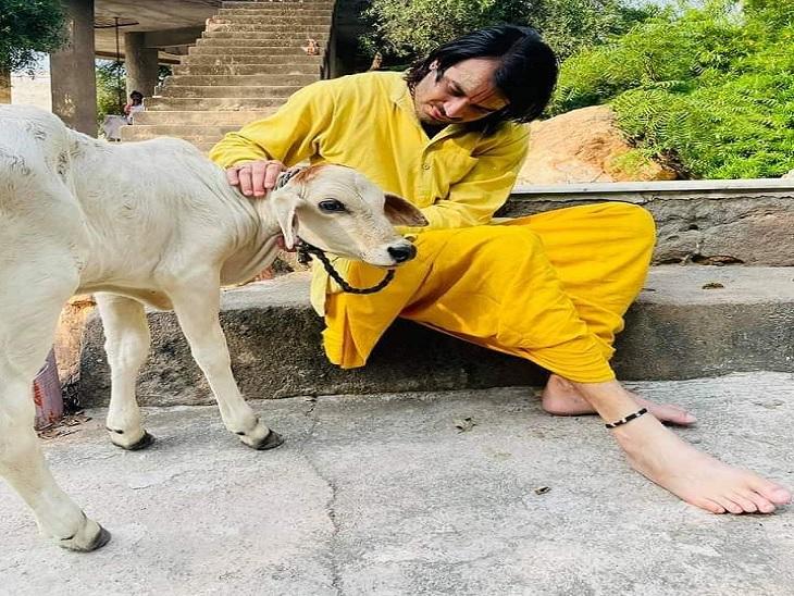 गाय के बछड़े को दुलारते तेजप्रताप। - Dainik Bhaskar