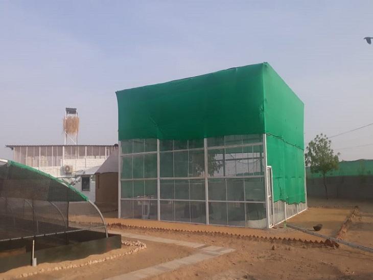 सम गांव में गोडावण का प्रजनन केंद्र