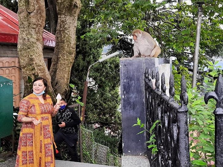महिला सैलानी का चश्मा लेकर रेलिंग पर बैठा बंदर।