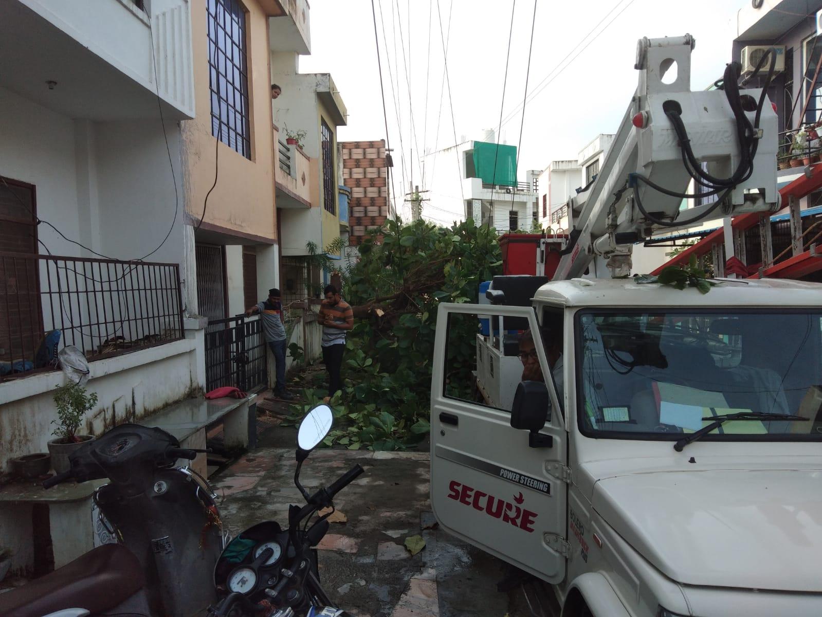 पुष्पा नगर में हरे पेड़ को काटा। - Dainik Bhaskar