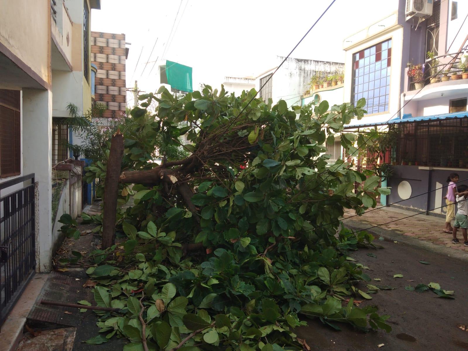 पुष्पा नगर में काटा गया पेड़।