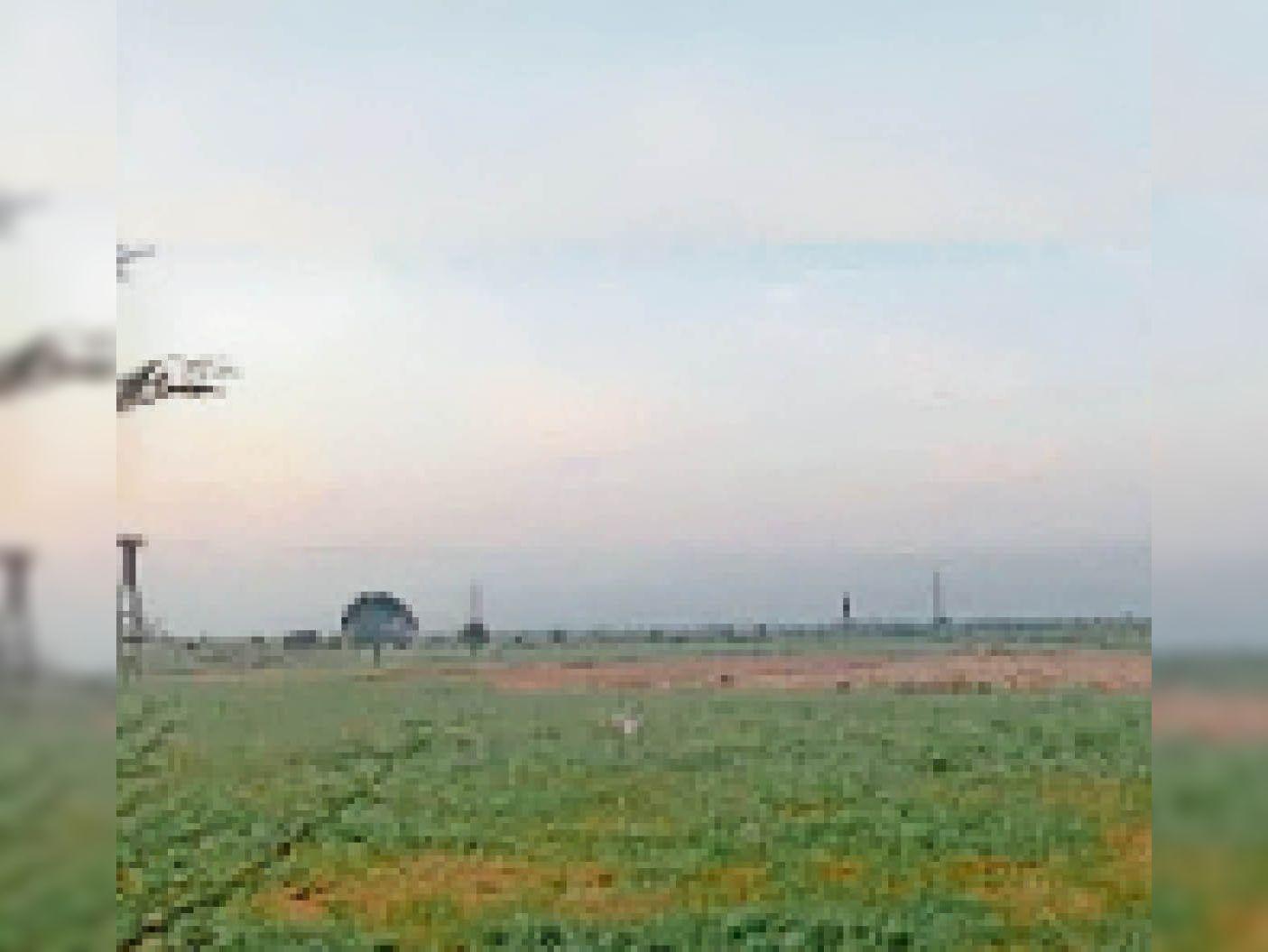 दमोह  गैसाबाद में जिस जगह पर सीमेंट प्लांट लगना है वहां पर इन दिनों किसानों द्वारा खेती की जा रही है। - Dainik Bhaskar