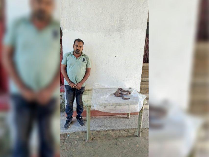 सांप के साथ गिरफ्तार आरोपी। - Dainik Bhaskar