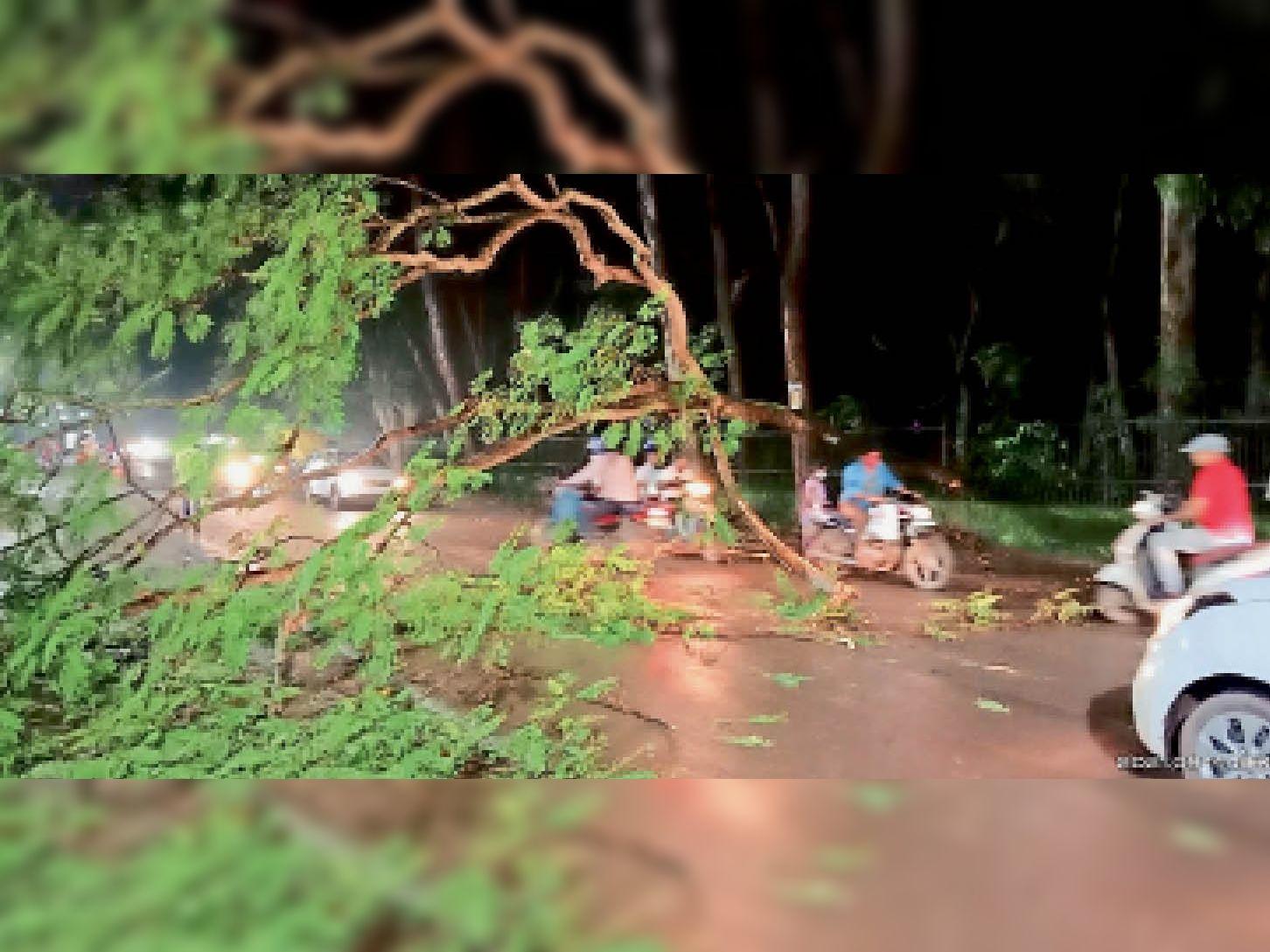 शहर के लालबाग इलाके में शाम को बारिश के दौरान गिरा पेड़। - Dainik Bhaskar