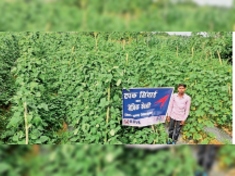केजीवीके और एचडीएफसी बैंक की पहल से टपक सिंचाई से की गई जैविक खेती। - Dainik Bhaskar