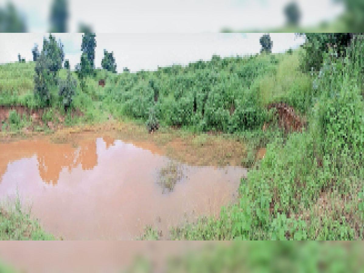 तालाब झाड़ियों से पट गया है। - Dainik Bhaskar