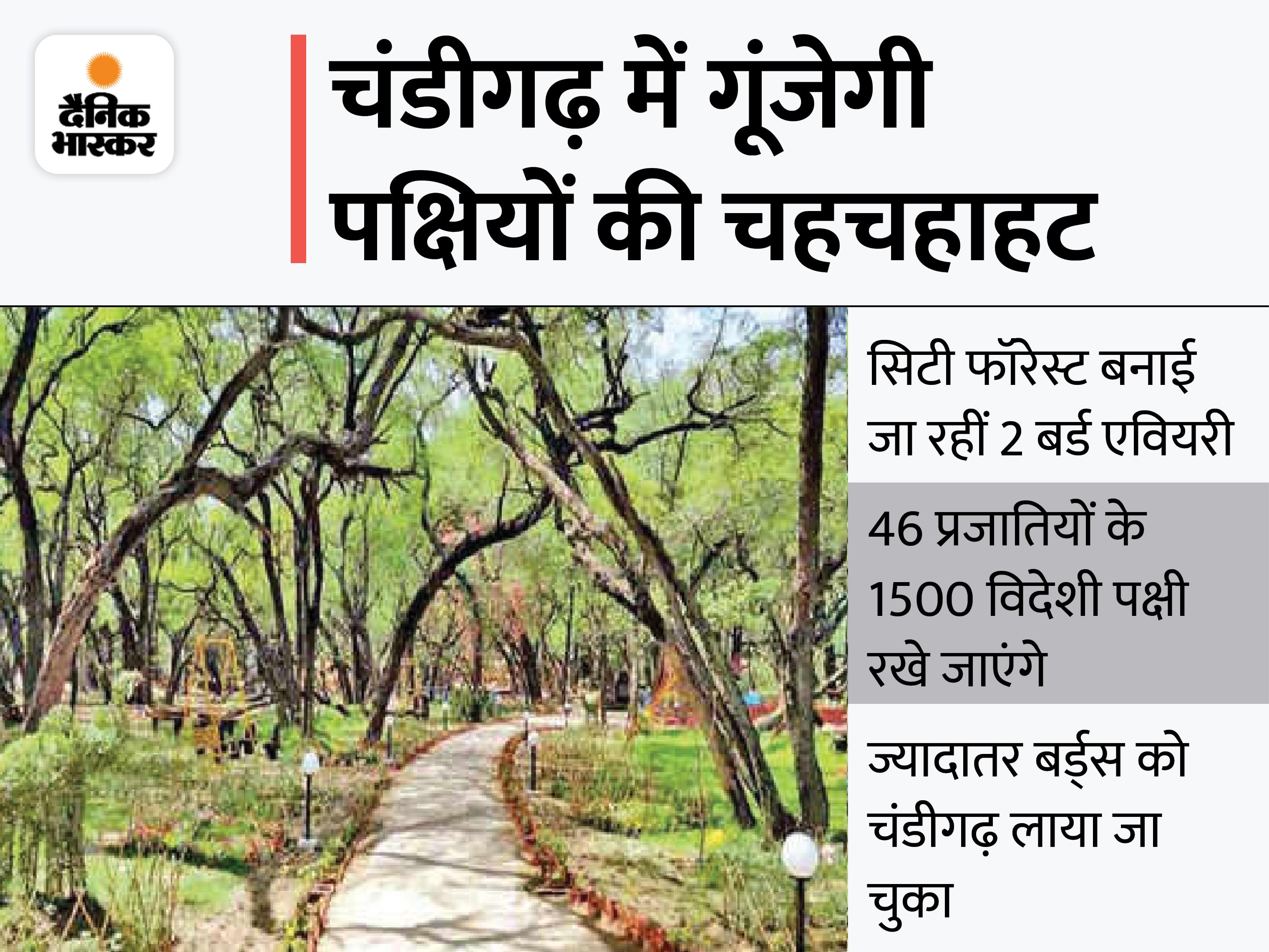 शहर का दौरा करके गई सेंट्रल जू अथॉरिटी की सिफारिशों पर प्रोजेक्ट को मिली मंजूरी|चंडीगढ़,Chandigarh - Dainik Bhaskar