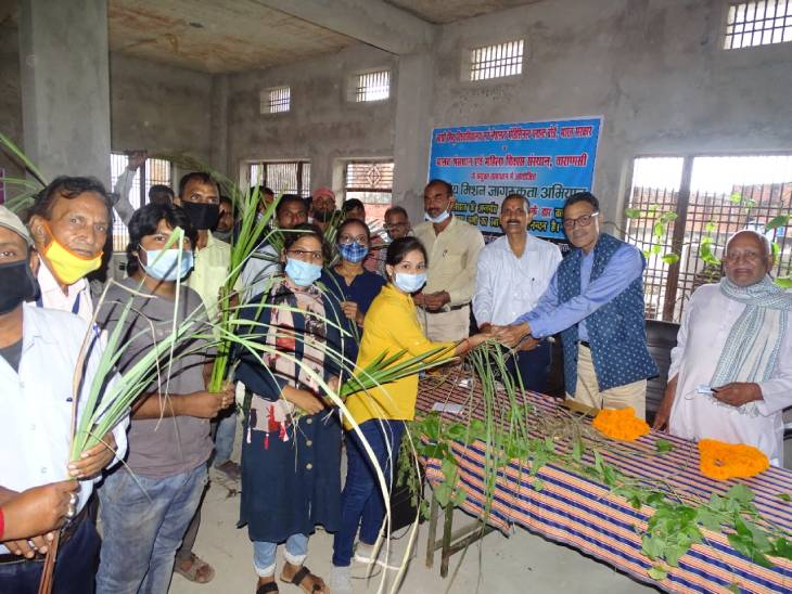 डेंगू से बचाने के लिए वाराणसी के काशी विद्यापीठ ब्लॉक में BHU के प्रोफेसरों ने बांटा गिलोय; प्लेटलेट्स बढ़ाने के साथ बुखार नाशक भी बताया|वाराणसी,Varanasi - Dainik Bhaskar