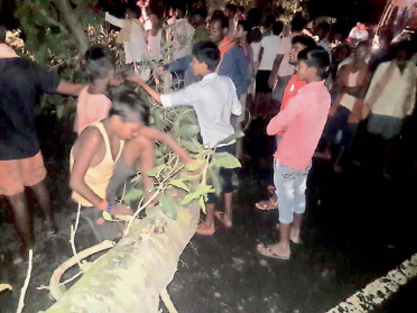 बछवाड़ा के गोधना पंचायत के एनएच 28 पर गिरा बरगद का पेड़। - Dainik Bhaskar