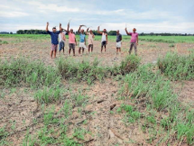 हाथ में धान का पौधा लिए किसान। - Dainik Bhaskar