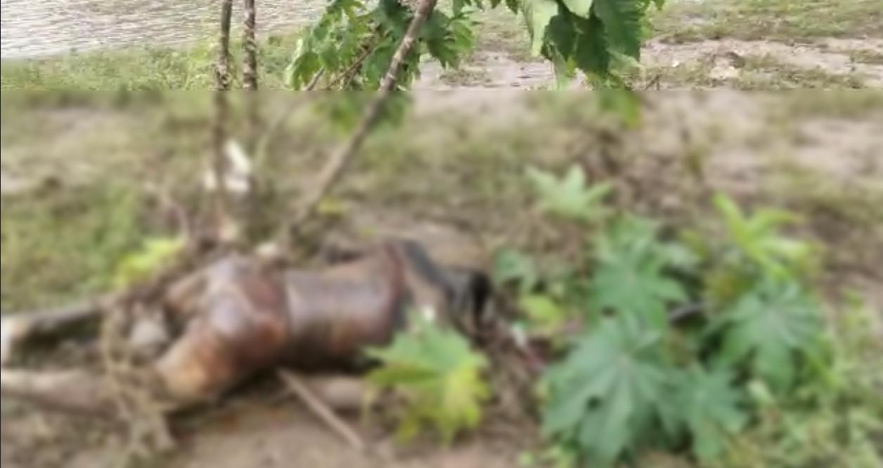 झाड़ियों में फंसा युवक का शव - Dainik Bhaskar