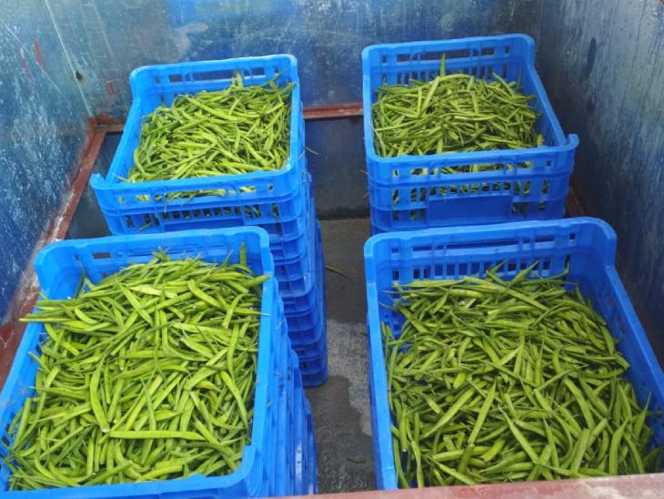 इस सब्जी कूलर में हरी सब्जियां 7 दिनों तक ताजी रह सकती हैं। जबकि फल करीब 10 दिनों तक खराब नहीं होंगे।