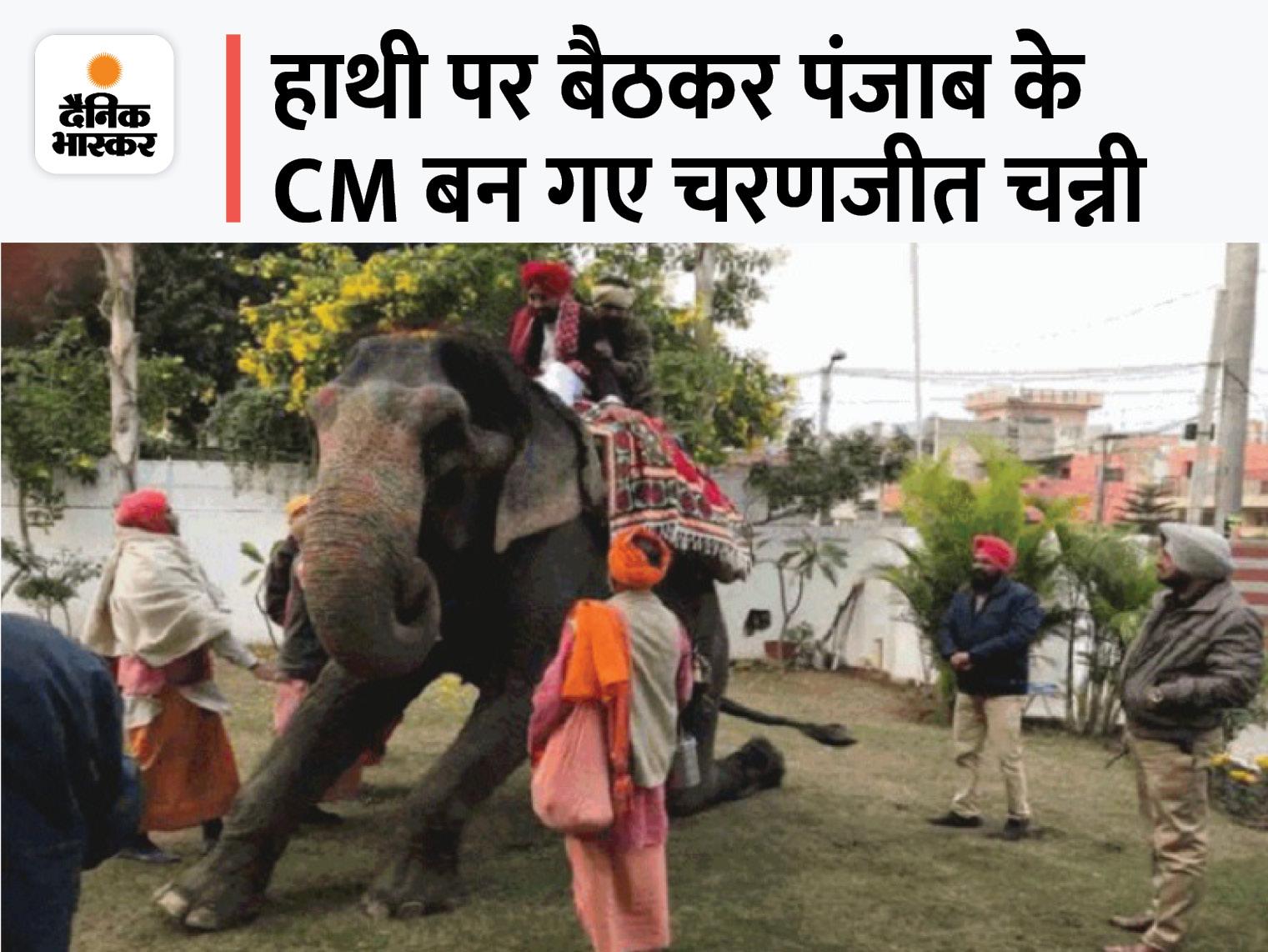 हाथी पर बैठने से भी कोई CM बन सकता है?:पंजाब के नए मुख्यमंत्री चरणजीत चन्नी के लिए 4 साल बाद सच साबित हुआ टोटका