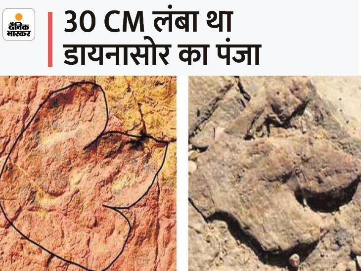 7 साल पहले 20 साइंटिस्ट ने जैसलमेर की पहाड़ियों पर खोजा था 15 करोड़ साल पुराना फुट प्रिंट, 1 महीने पहले कोई ले गया|देश,National - Dainik Bhaskar