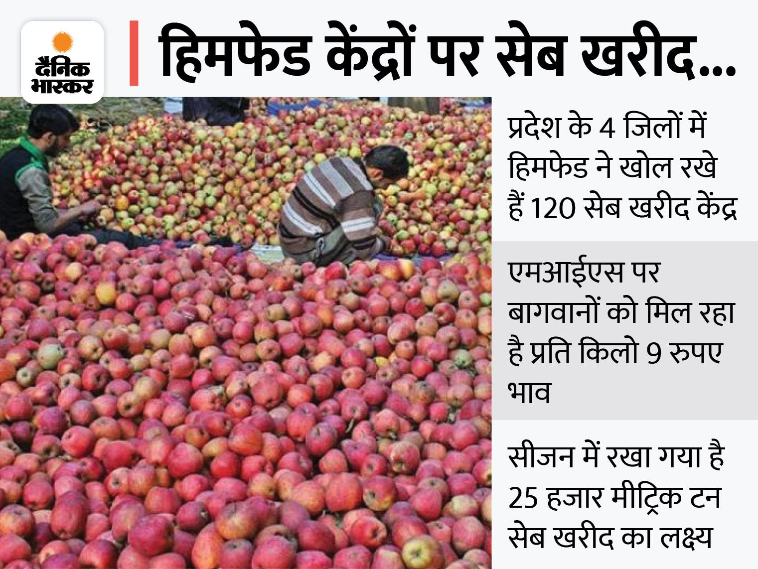 18 हजार मीट्रिक टन सेब की हो चुकी खरीद; कई हिस्सों में तुड़ाई का काम बाकी, ओलावृष्टि से प्रभावित फसल एजेंसी को बेच रहे बागवान|देश,National - Dainik Bhaskar