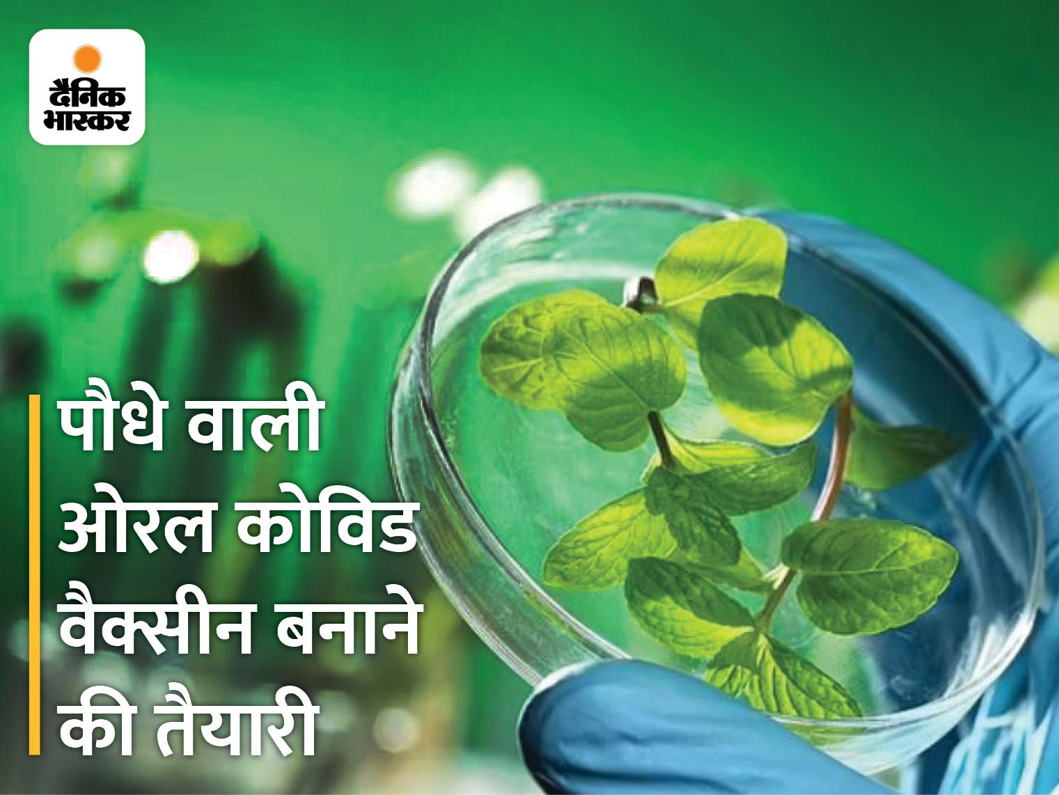 पौधा खाते ही शरीर में पहुंचेगी कोरोना की वैक्सीन, अमेरिकी वैज्ञानिक डेवलप कर रहे है ऐसा प्लांट|लाइफ & साइंस,Happy Life - Dainik Bhaskar