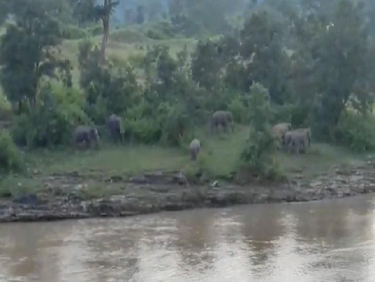 नदी में बैक्टीरिया के बैक्टीरिया जंगल की ओर जाने वाले।