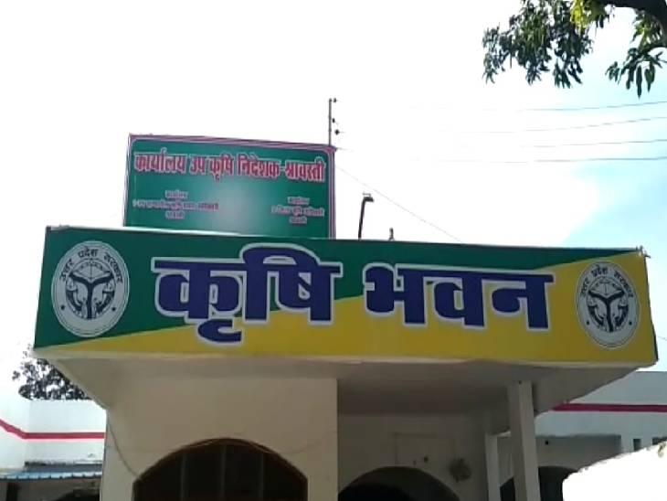 कृषि विभाग ने कण्डुआ हरदिया रोग से धान की फसल को बचाने की दी सलाह, कई कारणों से फैलती है यह बीमारी|श्रावस्ती,Shrawasti - Dainik Bhaskar