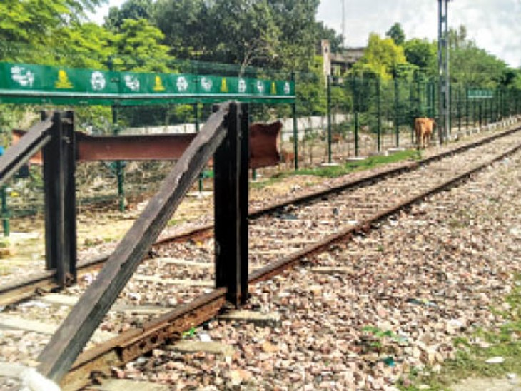 दिल्ली मंडल रेलवे दिल्ली में ट्रैकों के दोनों किनारें इस तरह लगा रहा पौधे। - Dainik Bhaskar