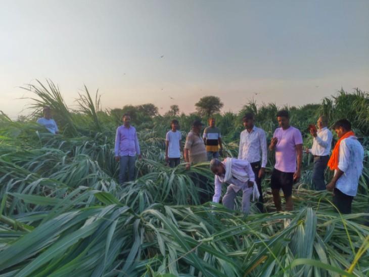 गन्ना खेत का निरीक्षण करती कृषि विभाग की टीम। - Dainik Bhaskar