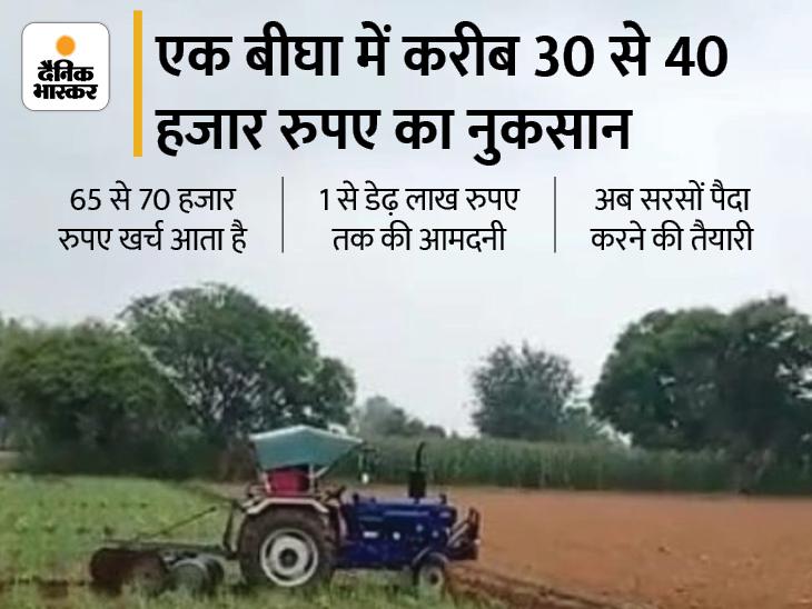 250 करोड़ की प्याज पर किसानों ने चला दिया ट्रैक्टर, झेलना पड़ रहा बड़ा नुकसान; तालिबान से आयात नहीं होने पर प्याज से होगा फायदा|अलवर,Alwar - Dainik Bhaskar