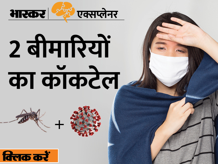 कोरोना और डेंगू के खतरनाक कॉम्बिनेशन से ट्विन्डेमिक का खतरा; जानिए ये क्या होता है? आप कैसे खुद को स्वस्थ रख सकते हैं|एक्सप्लेनर,Explainer - Dainik Bhaskar