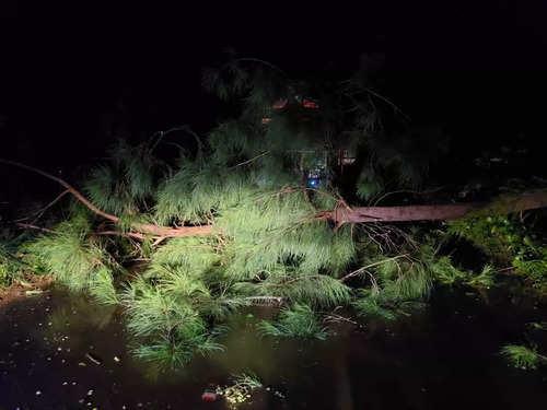 चक्रवात गुलाब के कारण तेज हवाओं के कारण विजयनगर जिले में कई पेड़ उखड़ गए।