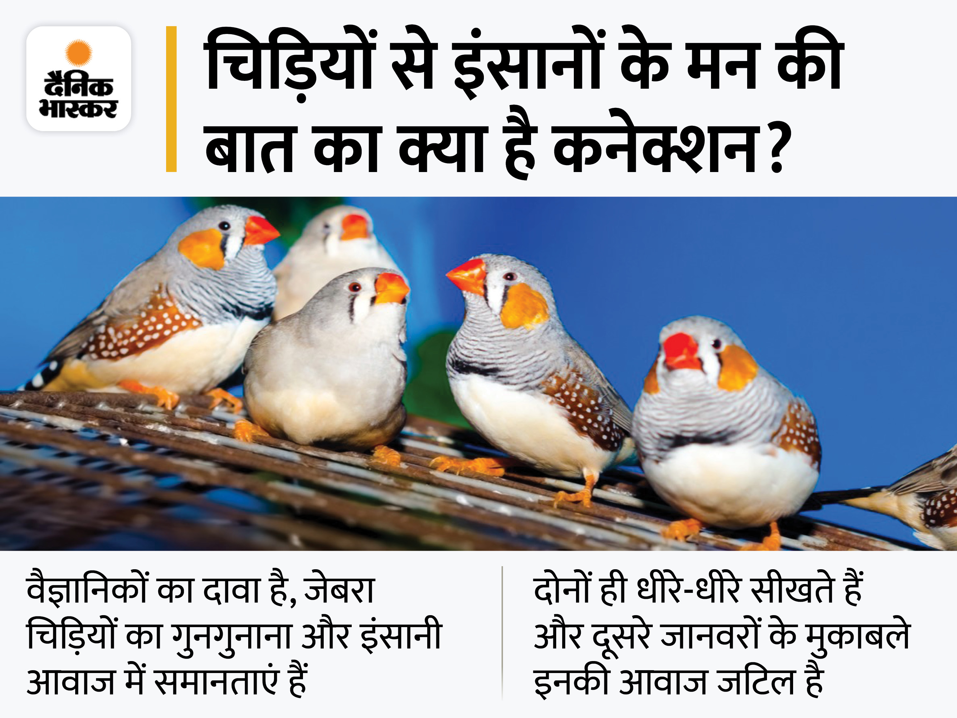 वैज्ञानिकों को चिड़िया के ब्रेन सिग्नल पढ़ने में कामयाबी मिली, इससे बोल न पाने वाले इंसानों के मन की बात समझी जा सकेगी|लाइफ & साइंस,Happy Life - Dainik Bhaskar