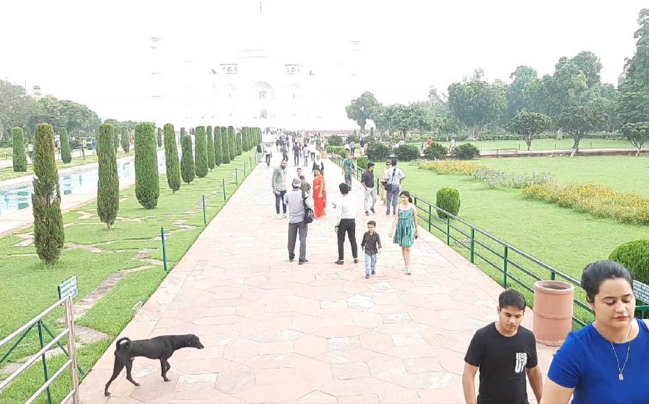 आगरा में अधिकांश क्षेत्रवासी आवारा कुत्तों से परेशान, पर्यटन स्थलों पर डर रहे लोग, एंटी रैबीज वैक्सीन की कमी|आगरा,Agra - Dainik Bhaskar