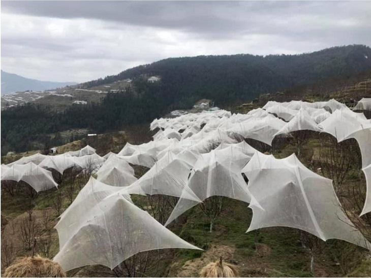 कृषि मंत्रालय ने वापिस लौटाई हिमाचल सरकार की मुआवजे की फाइल।