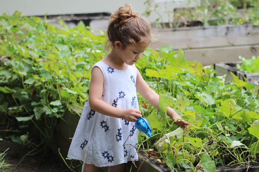 पौधों के साथ बेहतर बचपन