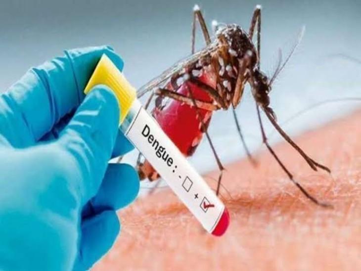 मंगलवार को मिले 51 नए मरीज, लखनऊ में 7 बुखार पीड़ितों में दिखे डेंगू के लक्षण, 47 घरों में लार्वा मिलने पर नोटिस जारी|लखनऊ,Lucknow - Dainik Bhaskar