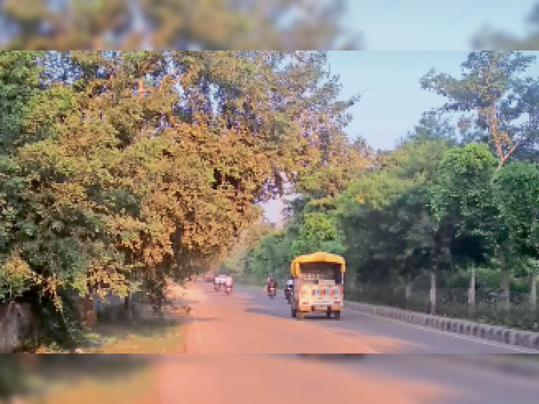 महावीर नगर में हरितिमा पट्टी। - Dainik Bhaskar