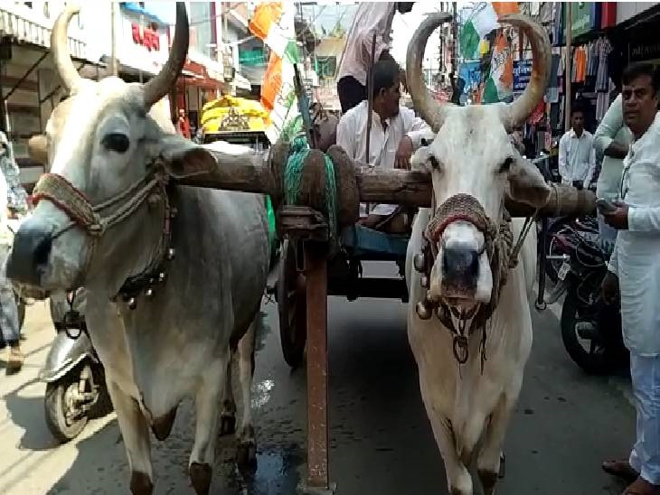 बेलगाड़ी से कार खींचकर पहुंचे कलेक्ट्रेट, कार्यकर्ताओं ने केंद्र सरकार के खिलाफ की नारेबाजी|देवास,Dewas - Dainik Bhaskar