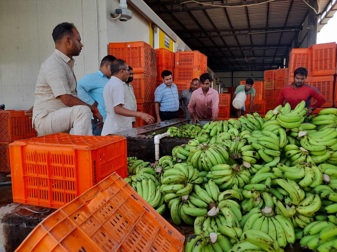 खाद्य सुरक्षा एवं औषधि प्रशासन ने नवरात्रों में खाद्य सामिग्री में मिलावट खोरों के खिलाफ कार्यवाही करते हुए फल विक्रेताओं और किराना स्टोर संचालकों के यहाँ छापा मारा - Dainik Bhaskar