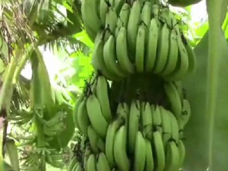 युवा किसान अतुल ने बताया कि वह लगातार यूट्यूब पर देखते रहते हैं कि किस तरह से फसल की देखरेख करनी चाहिए।
