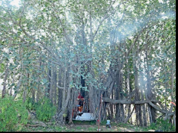 वड़ल्या हिंदवा माताजी विशाल वट वृक्ष के कोटर में है विराजित। - Dainik Bhaskar