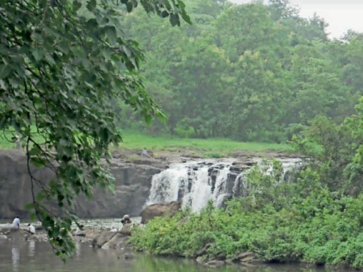 पेरेंट्स ने सीएमओ में शिकायत की तो वन विभाग ने ढूंढा। - Dainik Bhaskar