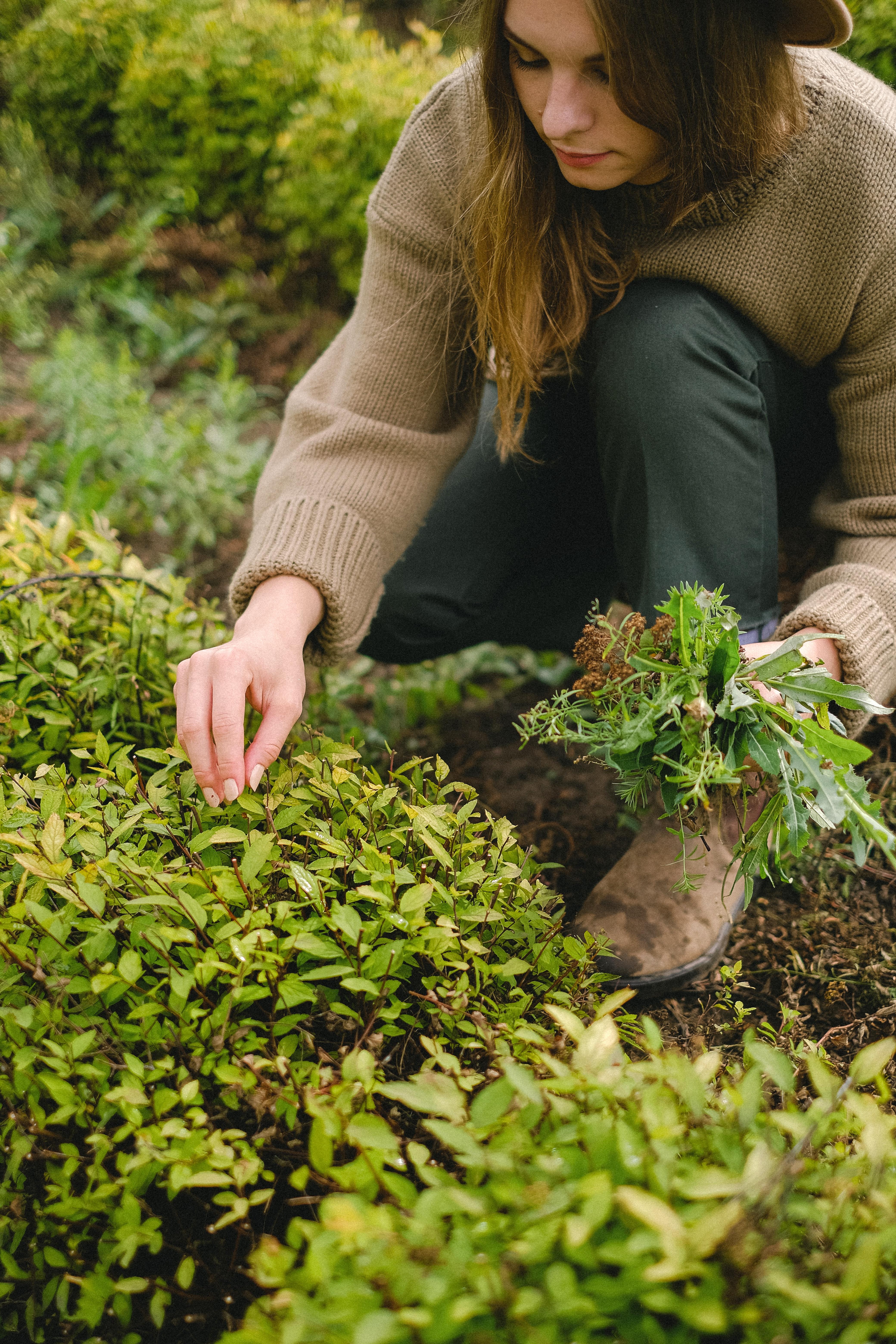 पौधों के साथ समय गुजार कर तो देखें
