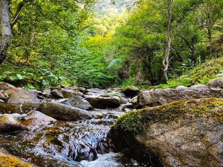 जंगल में पत्थरों के बीच से बहता पानी।