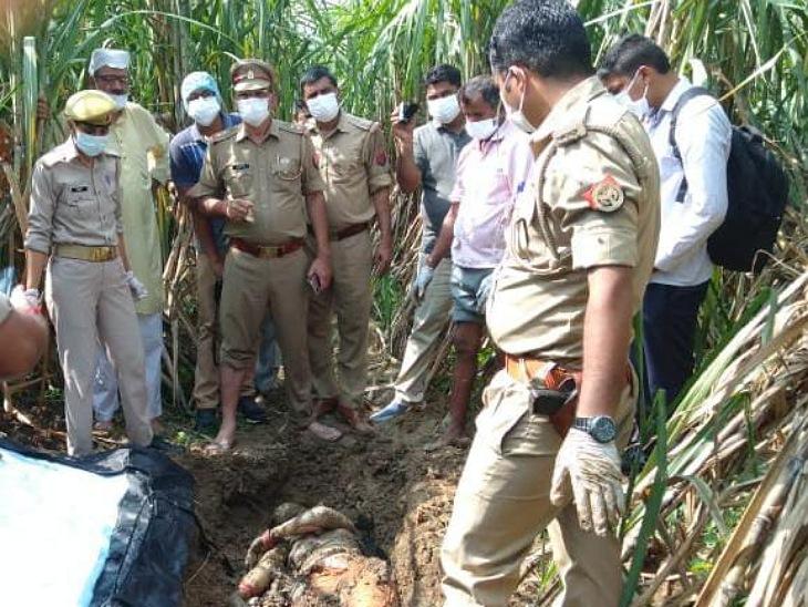 किसान सिंचाई को पहुंचा तो ईख में दबा मिला शव, हत्यारों ने पहले मारा फिर गड्ढा खोदकर किया दफन|मुरादाबाद,Moradabad - Dainik Bhaskar