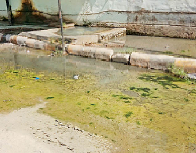 सिविल गुरदासपुर में जमा पानी (इनसैट) पनप रहा मच्छर। - Dainik Bhaskar