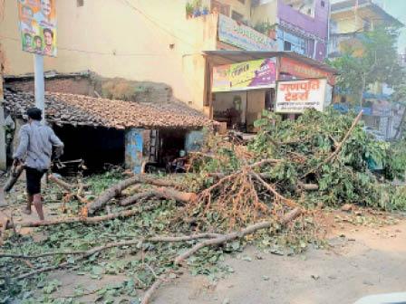आजाद चौक के पास नगर पालिका द्वारा काटे गए हरे भरे पेड़। - Dainik Bhaskar