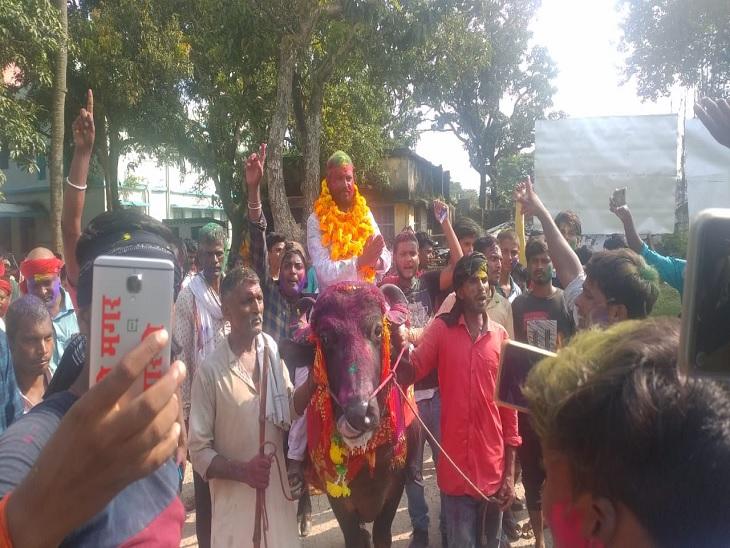 मधेपुरा में नामांकन के लिए भैंस पर सवार होकर गए मुखिया प्रत्याशी, अफसर ने FIR दर्ज करवा दी मधेपुरा,Madhepura - Dainik Bhaskar